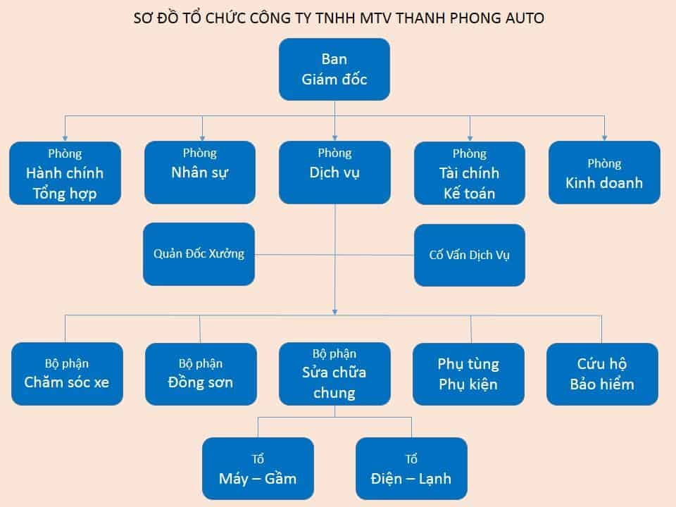 ORGANIZATION STRUCTURE AND INFRASTRUCTURE 12 Thanh Phong Auto HCM