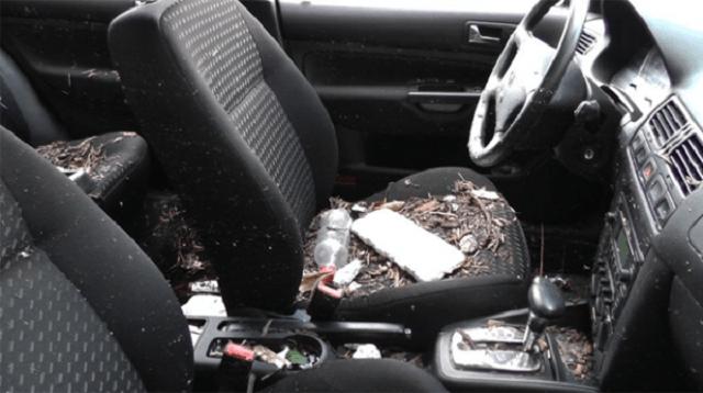 Thức ăn, thuốc lá là nguyên nhân gây mùi hôi thường gặp trên xe